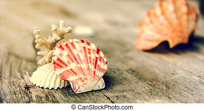 sea shell on wood background