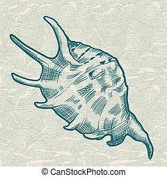 Sea shell. Original hand drawn illustration.