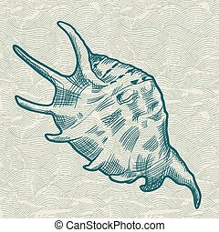 Sea shell. Original hand drawn illustration.
