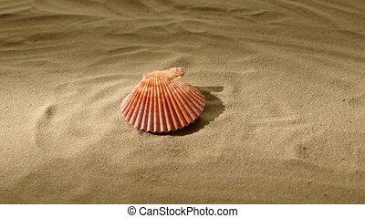 Sea shell, pink, on sand, back light, rotation
