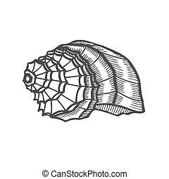 Sea shell Scallop. Black engraving vintage illustration....