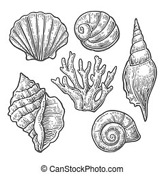 Sea shell. Set black engraving vintage illustrations. Isolated on  white background