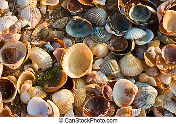 sea-shell, struktur