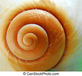 Sea shell texture