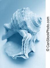 sea shell with blue tone