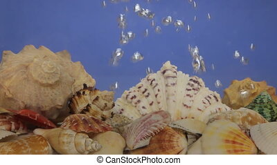 Sea shells and air bubbles in blue water.