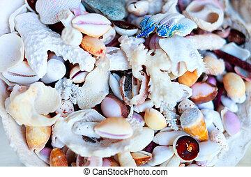 Sea shells and corals