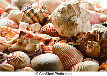 sea shells and pebble beach collection background