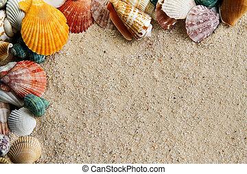 Sea Shells and Sand 2