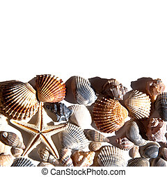 sea shells and star closeup on white background