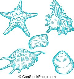 Sea shells and star. Hand drawn illustration.