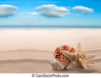 Sea shells and starfish on a white beach