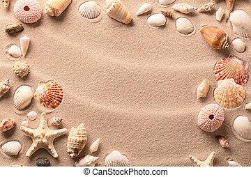 Sea shells and starfish on beach sand