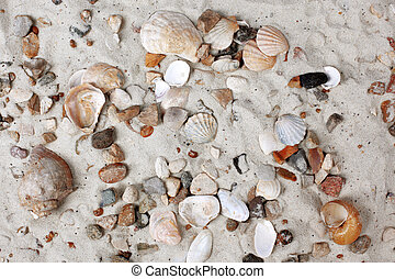 Sea Shells and stones in sand