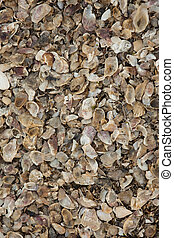 Sea Shells Background Texture