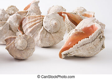 sea shells close up