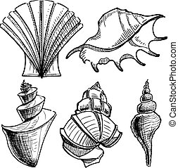Sea shells collection. - Isolated on white objects set. Eps...