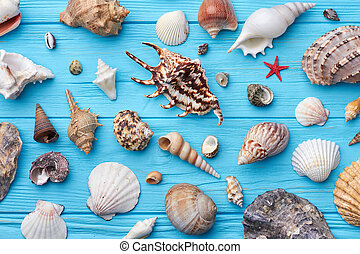 Sea shells collection close up.
