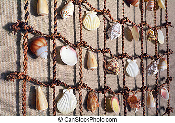 Sea Shells collection on a fishing net hanged on a wall ...