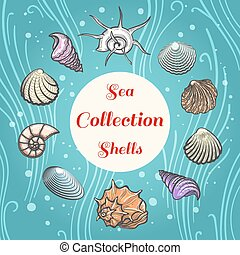 Sea shells composition with text