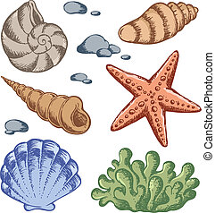 Sea shells drawings 1 - vector illustration.