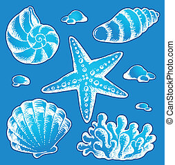 Sea shells drawings 2 - vector illustration.