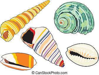 sea-shells - art illustration of isolated different...