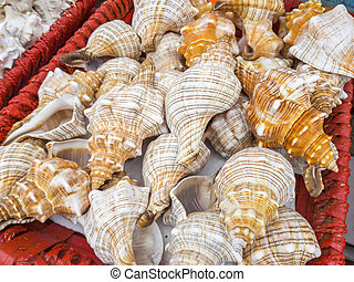 Sea shells for sale in a souvenir shop