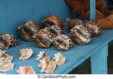 Sea shells lie on the table