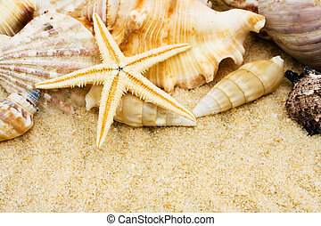 Lots seashells sitting in the sand, sea shells