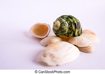 sea shells on a background