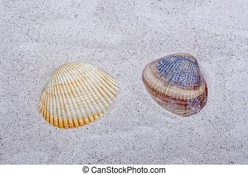 Sea shells on a sand background