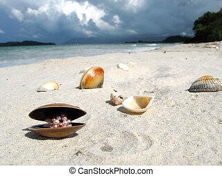 Sea shells on a sandy beach of Langkawi island, Malaysia