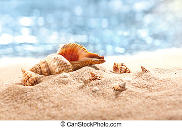 Sea shells on a tropical seashore lying on golden sand under the hot summer sun. Place for text.