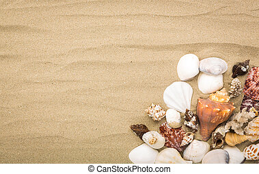 Sea shells on beach sand . Summer background