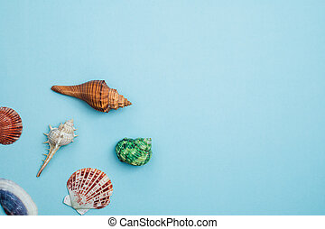 Sea shells on blue background
