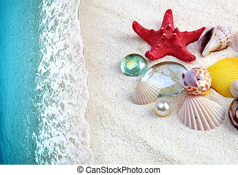 sea shells on sand beach