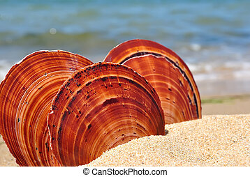 Sea shells on sand