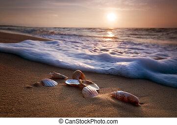 Sea shells on sand - Waves approaching sea shells lying on...