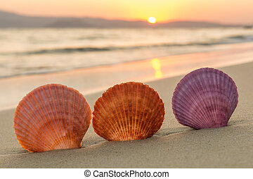 Sea shells on the beach at sunset