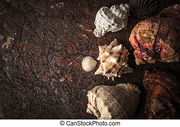 Sea shells on the dark stone background