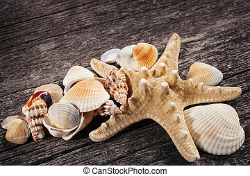 Sea shells on wooden background