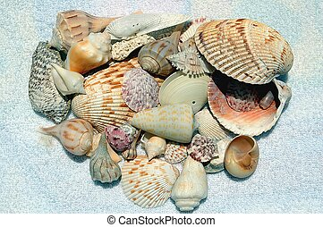 Sea Shells - Photographed sea shells collected at Fort Myers...