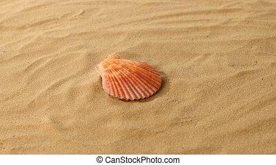 Sea shells, pink, on sand, rotation