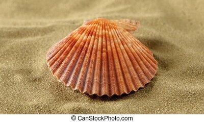 Sea shells, pink, on sand, rotation, close up