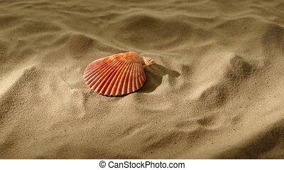 Sea shells, pink, on sand, shadow, rotation
