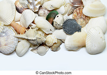 Sea shells scraped together