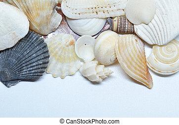 Sea shells scraped together