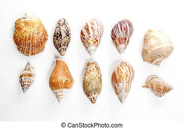 Sea shells - Sea-shells collection