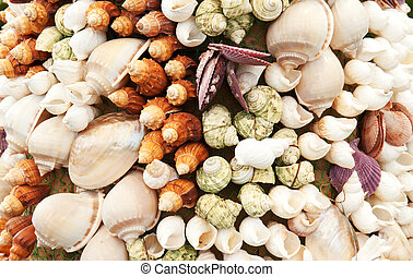 Sea Shells Seashells